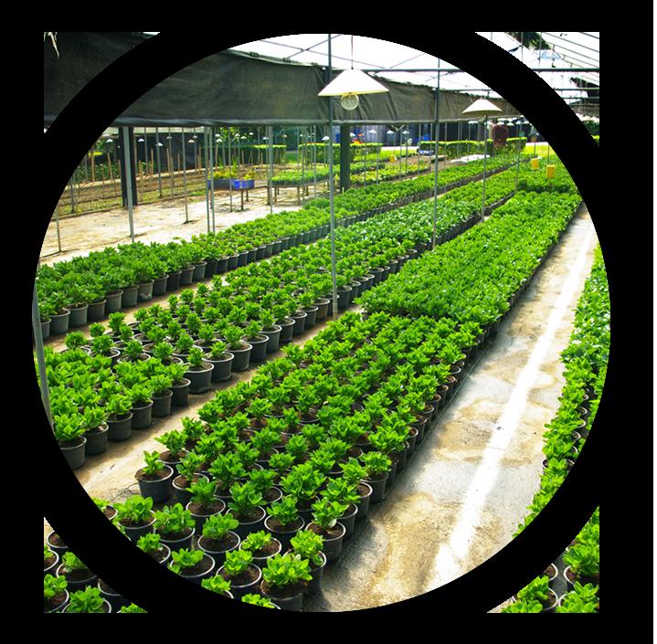 Horticulture : Activité économique