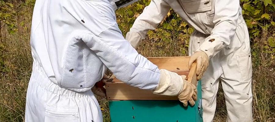 combinaison-apiculture